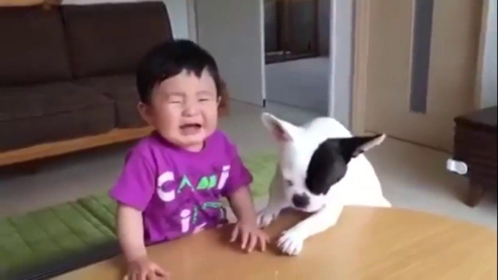 Funniest Videos Ever Make You Smile