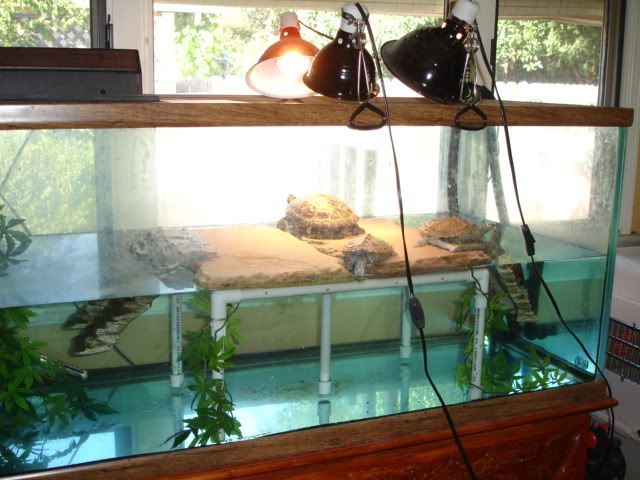 Tips for Creating the Best Aquarium Habitat